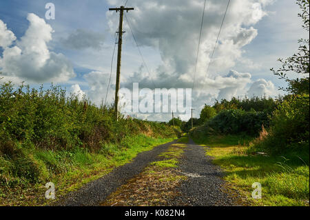 A narrow rural lane in County Kerry with grass growing along the centre of the lane, with telegraph poles. - Stock Image