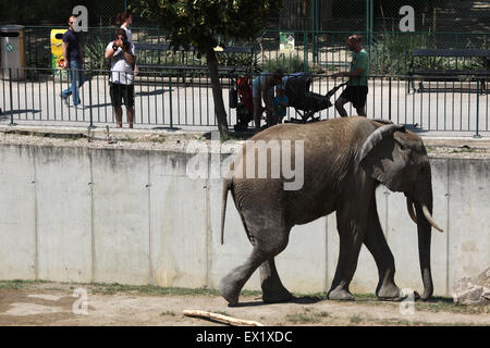Visitors look at the African bush elephant (Loxodonta africana) at Schönbrunn Zoo in Vienna, Austria. - Stock Image
