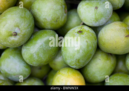 Raw Indian mangos at a market in Roxas, Oriental Mindoro, Philippines. - Stock Image
