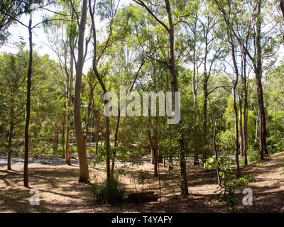 Landscape Of Trees In A Nature Reserve - Stock Image