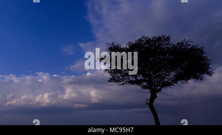 A sunset colored sky of orange clouds against blue, with the black branches of a winter oak tree silhouetted against the beautiful sky. - Stock Image