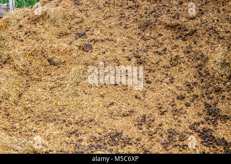Horse Manure pile behind a barn on a farm - Stock Image
