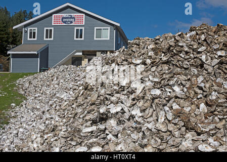 Quality Canadian oysters from the Fanny Bay area of Vancouver Island in British Columbia Canada - Stock Image