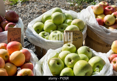 Baskets or bushels of Mutsu apples, Royal Gala apples, and other apple varieties at a farm stand in the Niagara Peninsula, Ontario, Canada. - Stock Image