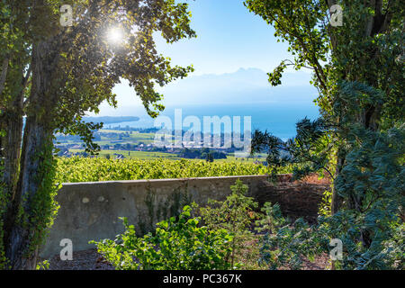 Vineyards near Rolle, lake Geneva - Stock Image
