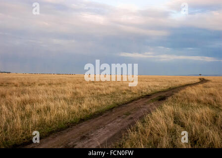 Dirt road under a cloudy sky through the yellow grass in the Masai Mara National Reserve, Kenya, East Africa - Stock Image