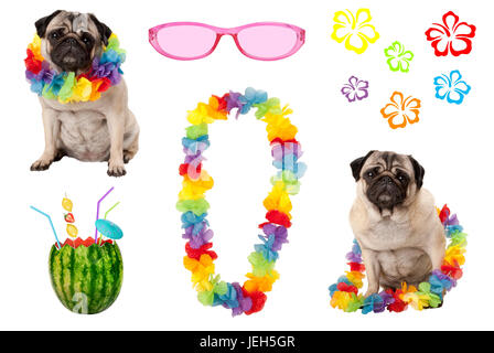 cute pug puppy dog with colorful summer party elements, isolated on white background - Stock Image