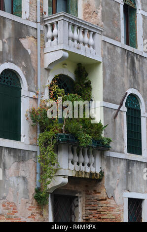 Lookingcat a balcony in Venice Italy - Stock Image