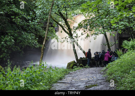 Summerhill Force, Teesdale, County Durham, UK.  13th June 2019. UK Weather.  With a yellow weather warning in force, floodwater thunders over Summerhill Force as heavy rain sweeps across Northeast England. Summerhill Force is a popular waterfall for tourists and walkers to visit in Upper Teesdale. Credit: David Forster/Alamy Live News - Stock Image