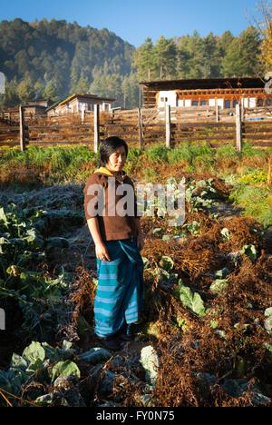 Bhutanese woman in village vegetable garden at Tabiting in the Phobjikha Valley, Bhutan. - Stock Image