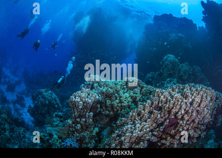 Underwater safari in the Red Sea where scuba divers explore pinnacles and mountainous coral reefs in the Fury Shoals area. September, 2018 - Stock Image