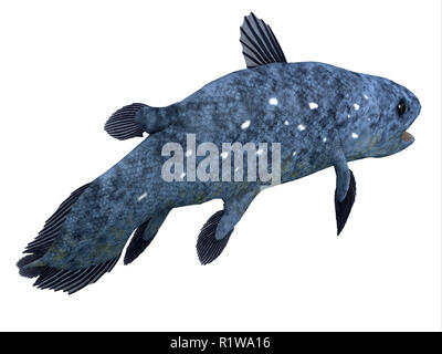 The Coelacanth fish was thought to be extinct but was found to be a living species in present times. - Stock Image