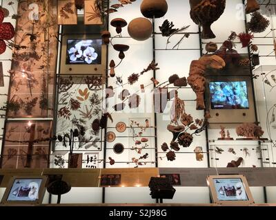 Display of natural objects such as coral at the American museum of natural history in New York - Stock Image