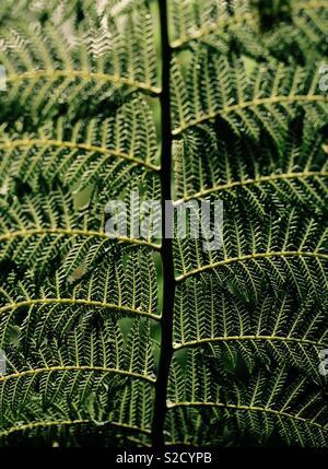 Underside of fern frond - Stock Image