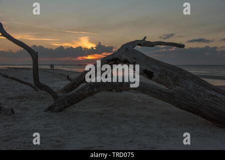 Sunset on Jekyll Island, Brunswick Georgia Driftwood Beach - Stock Image