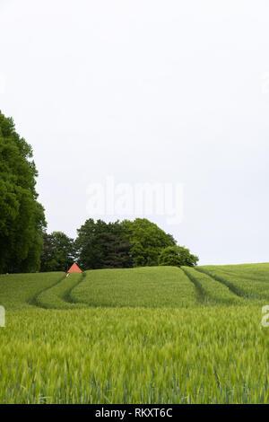 Cornfield near the village of Bösdorf, district of Plön, schleswig-holsteinische Schweiz, Schleswig-Holstein, Germany, Europe - Stock Image