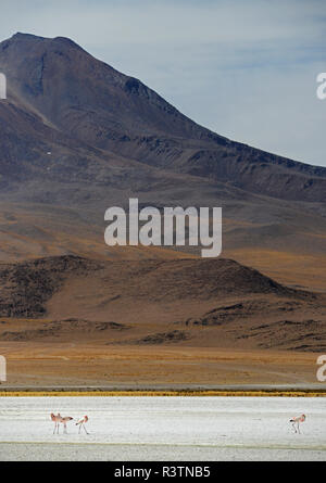 Flamingoes on Laguna Hedionda, Reserva Eduardo Avaroa, Bolivian desert, Bolivia - Stock Image