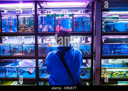 Local man watching the tropical fish at a pet shop on Tung Choi Street, Mong Kok, Kowloon - Stock Image