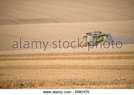 Harvest view of combine harvester cutting summer wheat field crop on farm - Stock Image