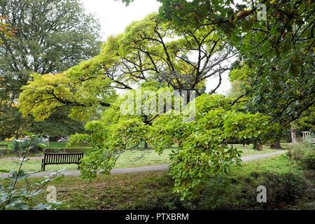 Roath Park in autumn, Cardiff Wales UK  KATHY DEWITT - Stock Image