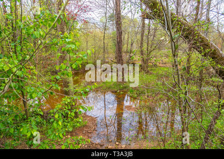 Woods After Spring Rains - Stock Image