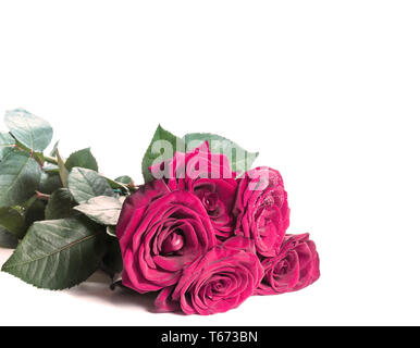 Red roses on white. Holiday background for Mothers Day, 8 March, Birthday, Valentines, Wedding - Stock Image
