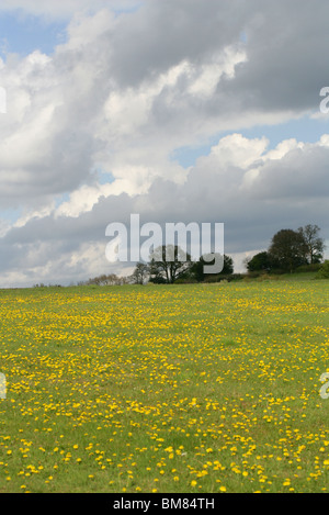 View Across the Chess Valley in Spring, Hertfordshire, UK - Stock Image