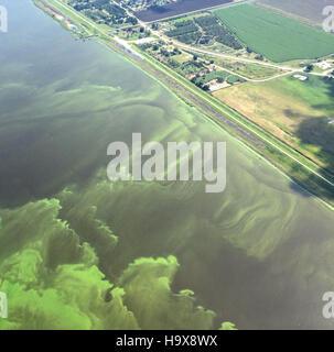 An aerial view of a cyanobacterial algal bloom July 9, 2016 in Lake Okeechobee, Florida. - Stock Image