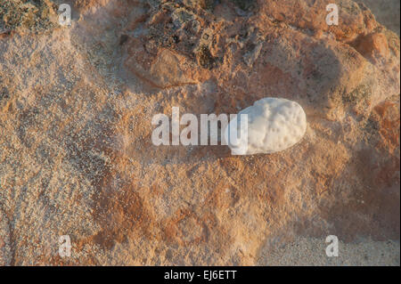 Isla Mujeres Beach Detail - Stock Image