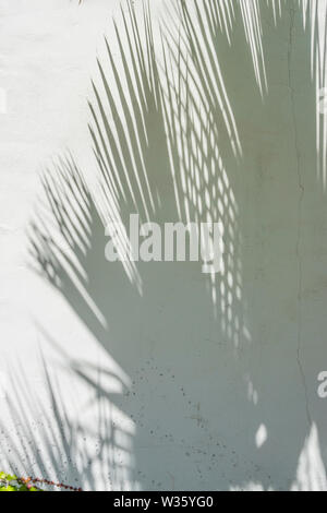 Shadows of palm fronds on white, rough, stucco wall create an interesting pattern. - Stock Image