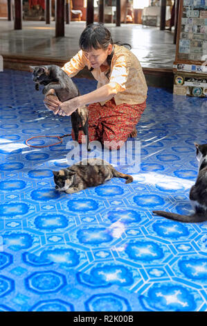 Nga Hpe Kyaung monastery is renowned for its jumping cats, trained to leap through hoops - Stock Image