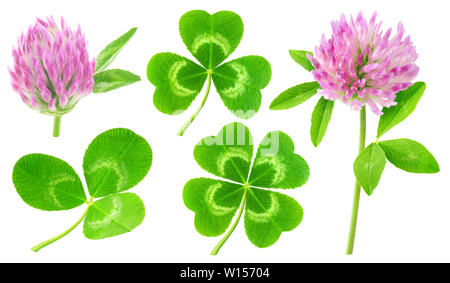 Isolated clovers. Collection of clover leaves and flowers isolated on white background with clipping path - Stock Image