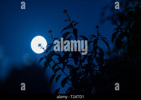 Moon in August seen at 1.30am in southern Scotland - Stock Image