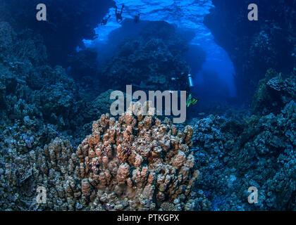 Scuba divers on Red Sea safari swim through coral reef pinnacles at dusk. September, 2018 - Stock Image