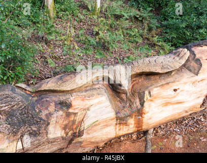 Chainsaw carved wooden eagle by local sculptor Rob Watts, Lodge Walks,in Langholm, Dumfries and Galloway, Scotland, UK - Stock Image