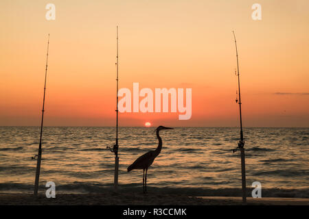 Great blue heron on beach, silhouetted between three fishing poles at sunset, Boca Grande, Florida. - Stock Image