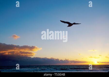 Miami Beach Florida South Beach Atlantic Shore sunrise sea gull - Stock Image