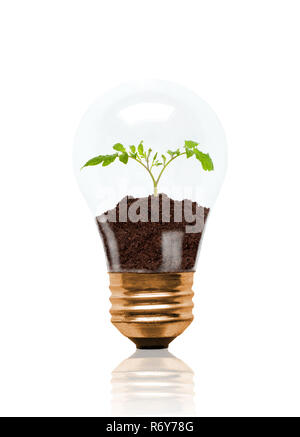 Young seedling growing out of soil inside light bulb. Concept of new life or beginning; environmental conservation, ecology or green movement. Isolate - Stock Image