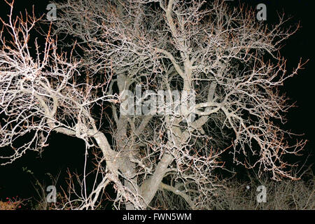 Night shot in the forest with flash. - Stock Image
