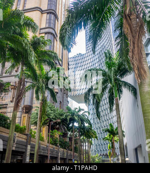 Tropical palm trees growing on Fraser Street between Parkview and DUO office towers in Singapore. - Stock Image