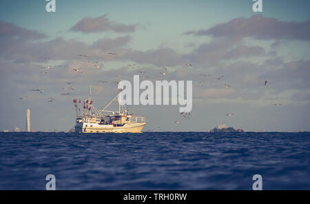 Danish fishing boat surrounded by group of seagull in coastal area - Stock Image