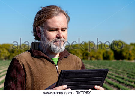 A farmer looks and uses his tablet in his field. - Stock Image