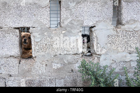 Two dogs looking through breeze block perimeter wall in Spain - Stock Image