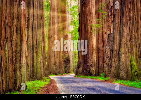 Road through Humbolt Redwoods State Park with redwoods. California - Stock Image