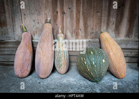 Row of gourd vegetable leaning against a wooden building - Stock Image