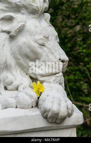 statue of a male lion ees closed peaceful expression holding a yellow daffodil in abney park cemetary, stoke newington, hackney, london, england, UK - Stock Image