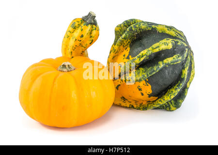 Unusually shaped green and yellow autumn squash and a small pumpkin. - Stock Image