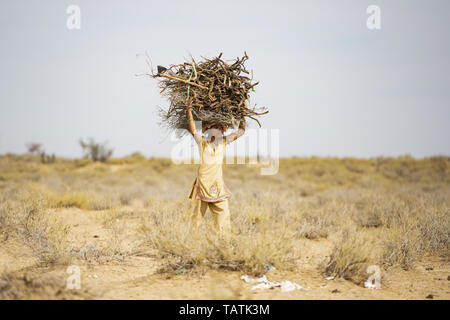 A poor and young girl is carrying heavy bunches of dry wood on her head in the middle of the Thar Desert, Jaisalmer, Rajasthan, India. - Stock Image