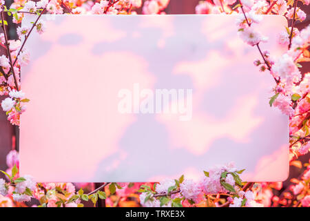 Paper blank between flowering almond branches in blossom. Pink flowers as a frame. - Stock Image