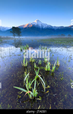 The snowy peak of Mount Legnone reflected in the flooded land at dawn, Pian di Spagna, Valtellina, Lombardy, Italy, Europe - Stock Image